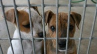 The lincoln branch for the RSPCA are appealing this week for people to buy a pet […]