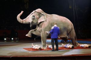 The Great British Circus arrived in Lincolnshire recently, and is causing quite a stir amongst animal […]