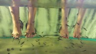 Fish pedicures could spread diseases like HIV and Hepititus C, experts have warned. The new guidelines […]