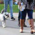 Dogs and owners walk with guided tour